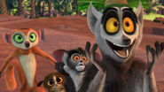 WOMC Lemurs Four