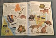 The Animal Atlas (25)