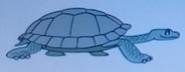 Batw-animal encyclopedia-giant-tortoise