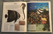 DK Encyclopedia Of Animals (77)