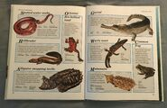 Macmillan Animal Encyclopedia for Children (36)