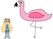 Star meets Greater Flamingo
