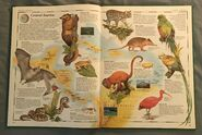 The Animal Atlas (6)