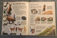 Usborne World Wildlife- Mountain Wildlife (2)