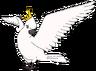 Gertie the Cockatoo