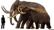 Columbian-mammoths-vs-modern-african-elephants-wooly-mammoths