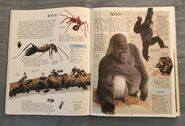 DK Encyclopedia Of Animals (38)