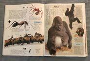 DK Encyclopedia Of Animals (38)