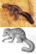 Lesmesodon