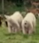 Evan Almighty Polar Bears