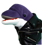 Loan Dolphin PNG
