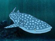 Rileys Adventures Whale Shark