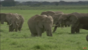 The Rhinoceroses and Elephants That Had to Be Dead