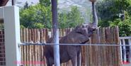 Utah Hoogle Zoo Elephant