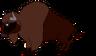 Biggy the American Bison