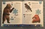 Polar Animals Dictionary (13)