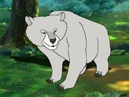 Rileys Adventures Kermode Bear