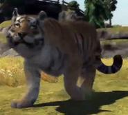 Siberian-tiger-zootycoon3