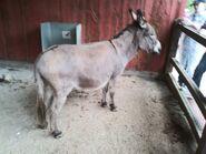 Cleveland Metroparks Zoo Donkey