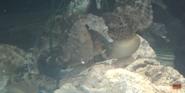 Georgia Aquarium Seahorse
