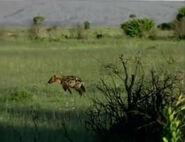 HugoSafari - Hyena03