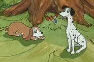 Dingo pictures dalmatians dogs