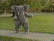 Elephant4th