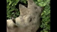 White Rhino Animal Atlas