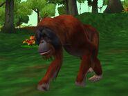 Zt2-orangutan
