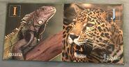 Animal ABC's (World Wildlife Fund) (5)