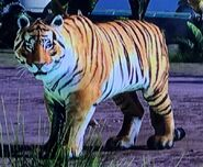 Bengal Tiger ZTX