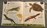 Reptiles and Amphibians Dictionary (11)