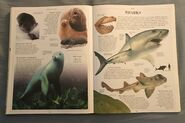 DK Encyclopedia Of Animals (147)