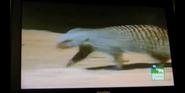 Denver Zoo Mongoose