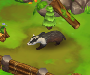 European-badger-zoo-2-animal-park