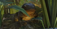 Planet Zoo Goliath Frog