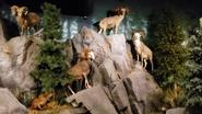 Rolling Hills Zoo Bighorns