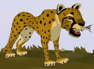 Cheetah WOZ