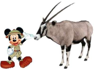 Mickey meets Gemsbok