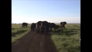 More Elephant Sound Effects