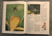 The Kingfisher Illustrated Encyclopedia of Animals (73)