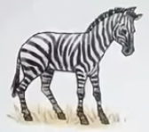 Zebra usborne my first thousand words