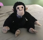 Chuckie the Chimpanzee