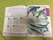 IMG 0251 flying fish ah