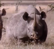 MATG Rhino