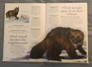 Polar Animals (Over 100 Questions and Answers to Things You Want to Know) (4)