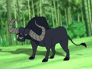 Rileys Adventures Wild Water Buffalo