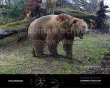 Ursus-deningeri-738x591
