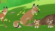 Wild Kratts Coyote