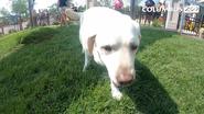 Columbus Zoo Dog